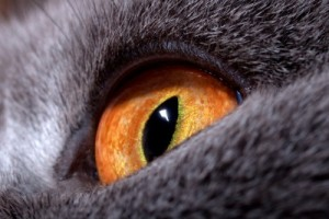 golden-eye