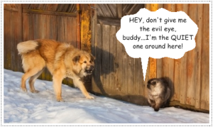 cat-dog-talk
